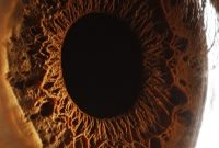 amazing photo human eye