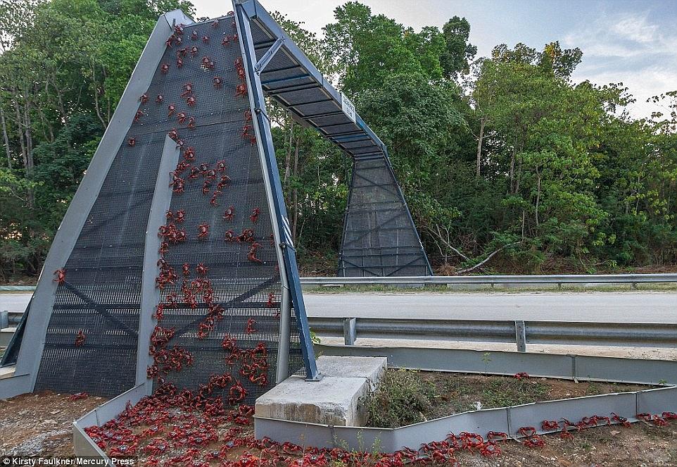 jembatan hewan liar