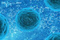 apa itu stem cell
